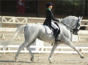 Training Lipizzaner Horse
