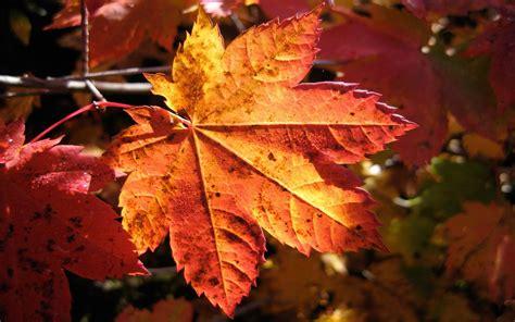 photography, Nature, Plants, Macro, Fall, Leaves ...