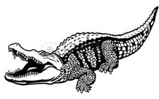Crocodile Black and White Drawing