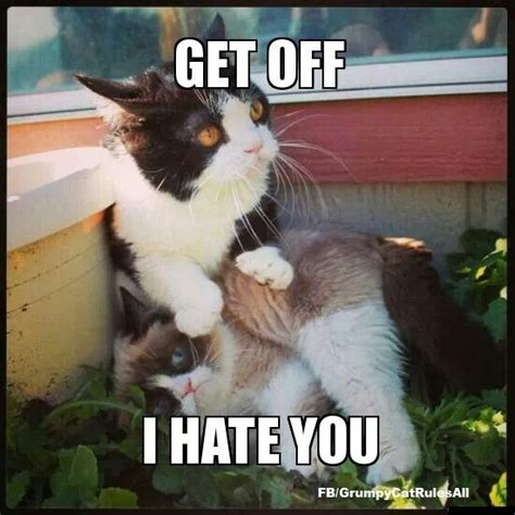 Tard The Cat Meme - 201 best images about grumpy cat