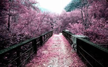 Spring Pink Laptop Wallpapers Background Cool Hdwallpaperfun