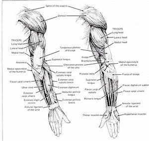 Printable Arm Diagrams