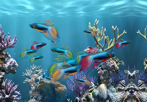 fond d aquarium 3d desktop background fond d ecran gratuit aquarium
