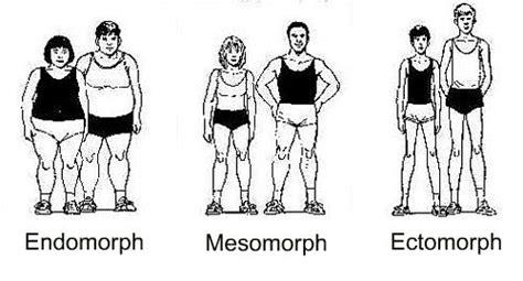 Ectomorph, Mesomorph And Endomorph