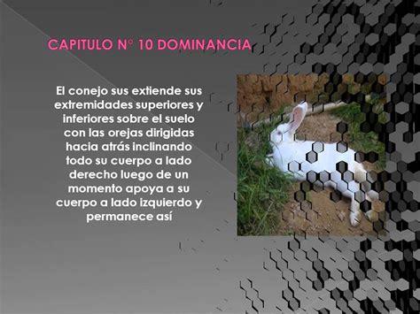 Descripcion De Las Conductas De Los Conejos