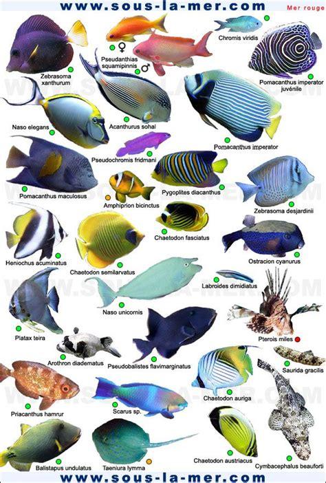 raie cuisine classification des poissons de mer poison eau de mer vrac it