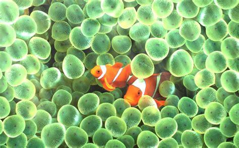 Living Marine Aquarium 2 Animated Wallpaper - desktop living marine aquarium 2 animated wallpaper