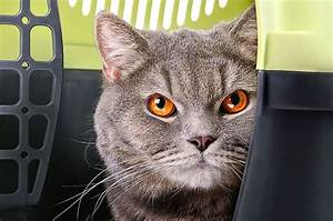 Verkleidung Für Katzen : transportbox katze katzenboxen f r den sicheren transport ~ Frokenaadalensverden.com Haus und Dekorationen