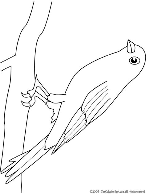 2 Vogels Kleurplaat by Kleurplaat Vogels Boyama Sayfasi Birds Ve Crafts