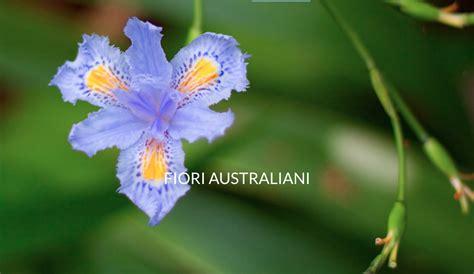 fiori australiani floriterapia