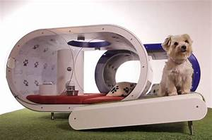 modern dog house with smart concept home design and interior With smart dog house