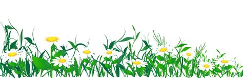 garden box design daisies and grass png clipart picture gallery