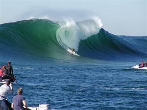 mavericks surf logo