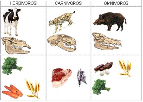 viaje por el conocimiento herbivoros carnivoros