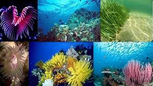 Marine Ecosystem Animals And Plants