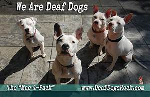 we are deaf dog advocates deaf dogs rock With deaf dog training