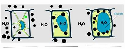Osmosis Example Clipart Osmotic Test Clip Cliparts