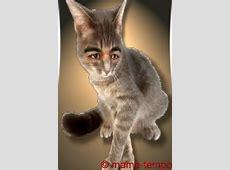 lustige Katzenbilder, ulk, gag, spass, cat