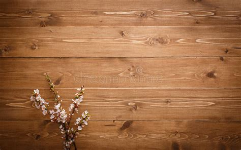 summer flowers  wood texture background stock photo