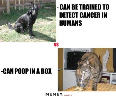 can cats detect cancer memes pictures memey