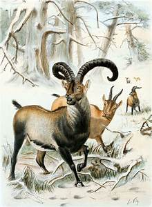 De-extinction - Wikipedia, the free encyclopedia