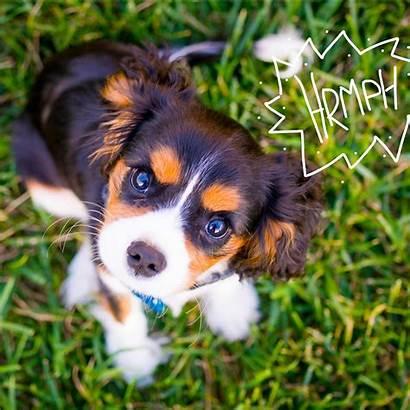 Dog Puppy Training Rspca