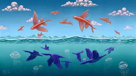 flying fish wallpaper gallery