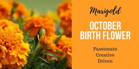 october birth flower calendula cosmos marigold
