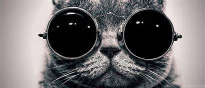 Funny Definition Wallpapers Ultra Uhd Cat Desktop