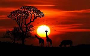 Sunset, African, Savanna, Sun, Red, Sky, Silhouettes, Of, Tree