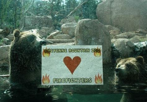 1000 images about cheyenne mountain zoo on