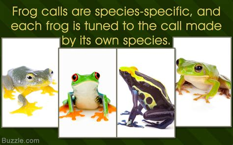 frog names a list of all types of frogs and toads with amazing pictures