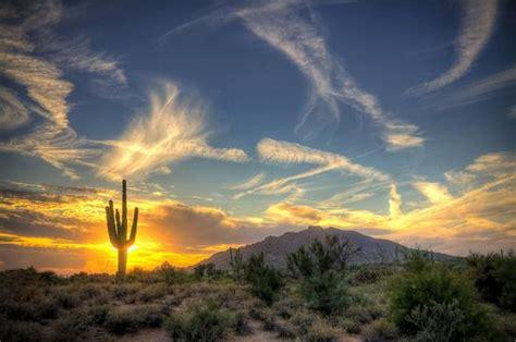 giant saguaro cactus barnorama