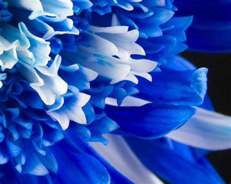 Flowers Blue On Pinterest Blue Flowers Blue Bells And