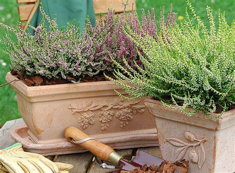 plante d hiver exterieur plante d hiver exterieur 28 images plante exterieur d hiver atlub plante exterieur d hiver