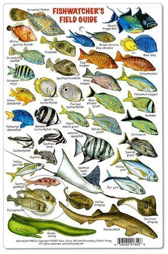 Fishwatchers Reef Field Guide: Fishes of Tropical Atlantic