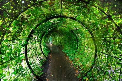 Garden Of Poisonous Plants In Alnwick (10 Photos) Funcage