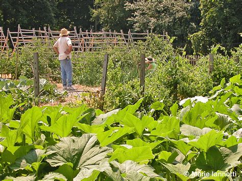 Planning A Vegetable Garden Things To Consider And