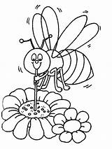 Bee Coloring Pages Print Animals Colors sketch template