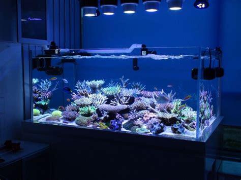 Le Led Aquarium Eau De Mer by Bon S Lagoon Takes Second Zeovit Dream Tank Of The Quarter