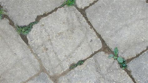 polymeric sand rg polymeric sand for the jointing of standard paver installations