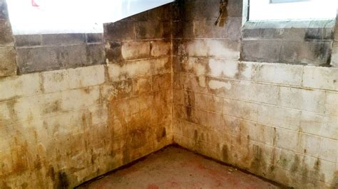 Why Bleach Is Not The Answer For Mold Remediationall Dry