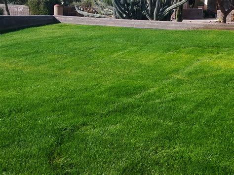 best looking lawn grass top 28 best looking grass best looking lawn natural best natural looking artificial grass