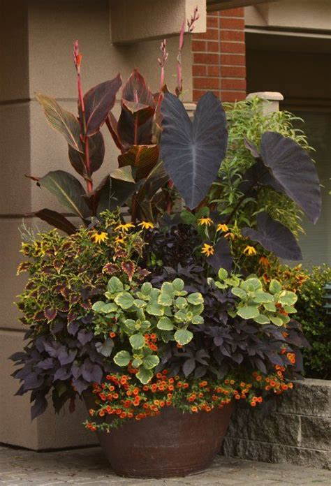 mixed flower pot elephant ears black eyed susans