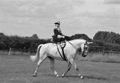Saddle Riding Side History Passionate Unveiled Horse