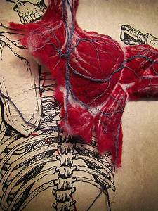Image Of The Week  Felted Anatomy