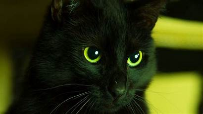 Cat Looks Eyes 1080p Background Widescreen Hdtv