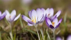 Gartenarbeit Im Februar : gartenarbeit im m rz sat 1 ratgeber ~ Lizthompson.info Haus und Dekorationen