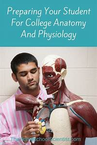 17 Best Images About Homeschool Anatomy On Pinterest