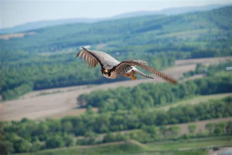 ppl phone number ppl montour preserve parks 700 preserve rd danville
